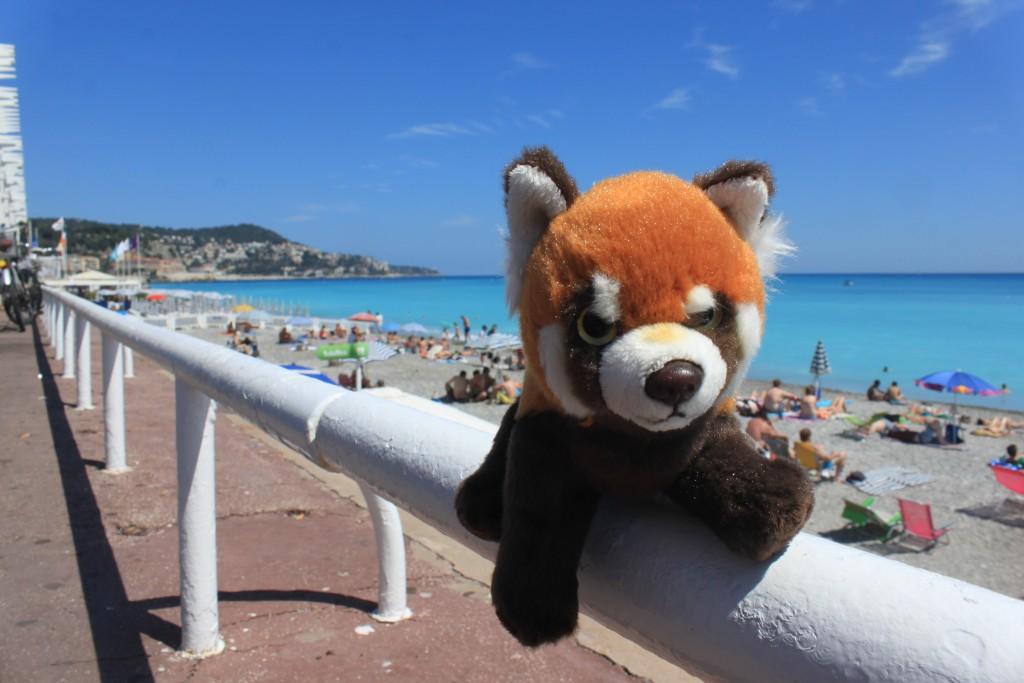 Panda v Nice