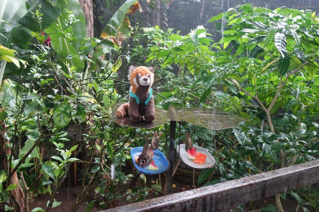 panda na koloběžkách
