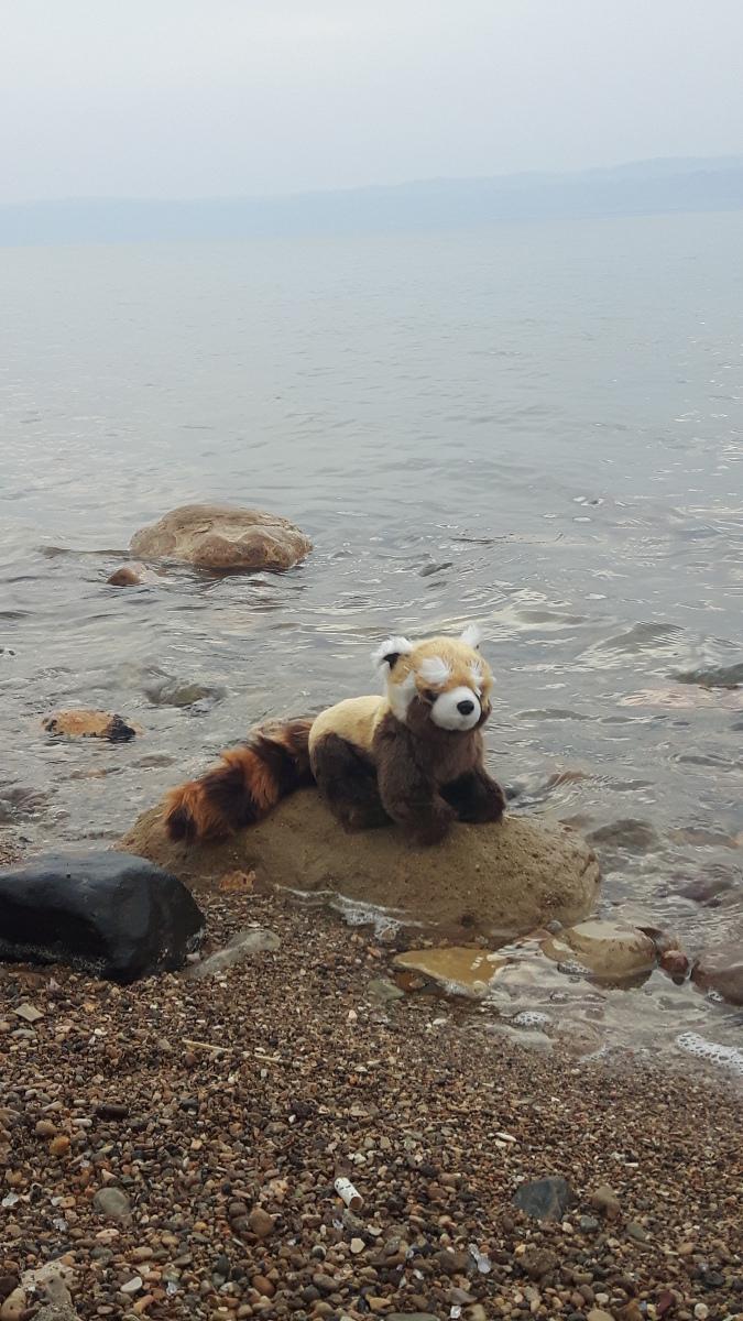 Panda v Jordánsku